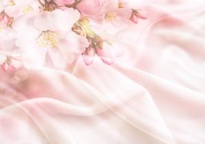 blossom-2385247_960_720