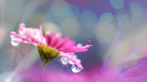 flower-1669896_1280